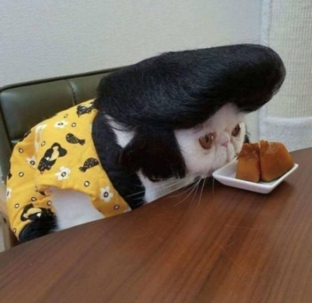 Кот-элвис