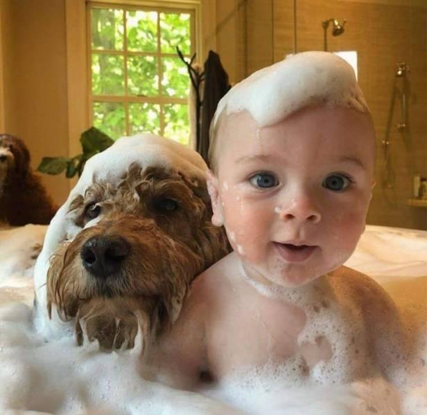 Младенец и собака в ванне
