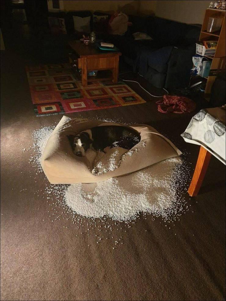 Собака разгрызла подушку