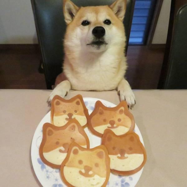 Собака и печеньки