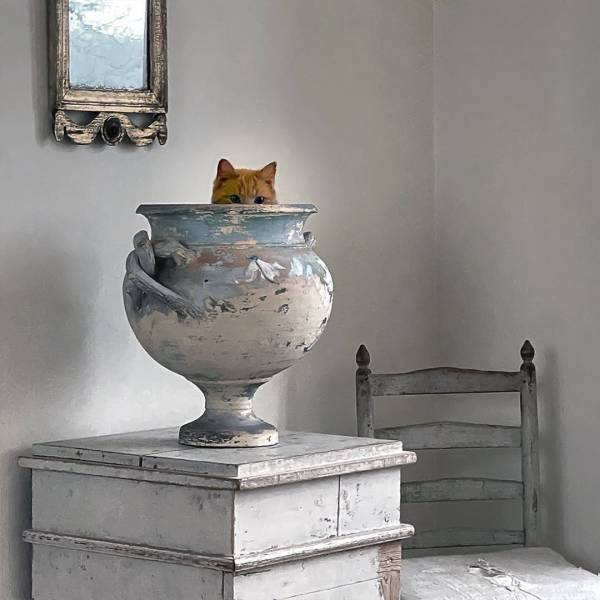 Кот сидит в вазе