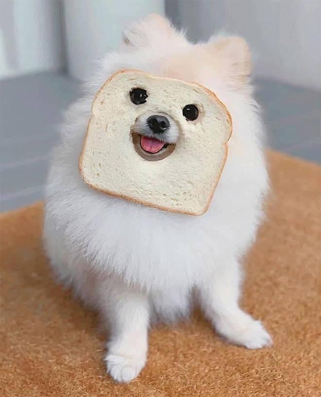 Собака и тост