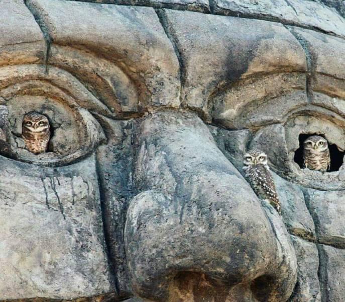 Совы на скульптуре