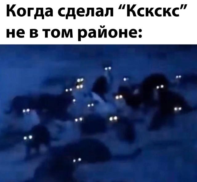 Коты на районе