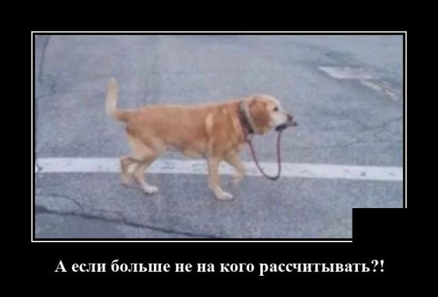 Демотиватор про выгул собаки