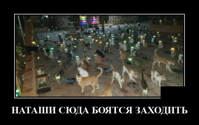 Демотиватор про котов на улице