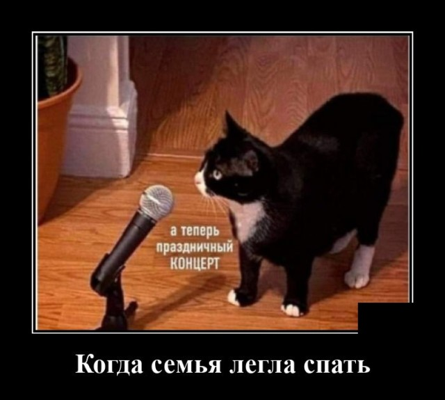Демотиватор про кота ночью