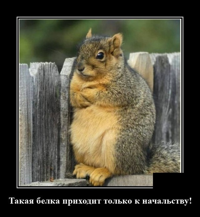 1599748277_demotivatory_06.jpg