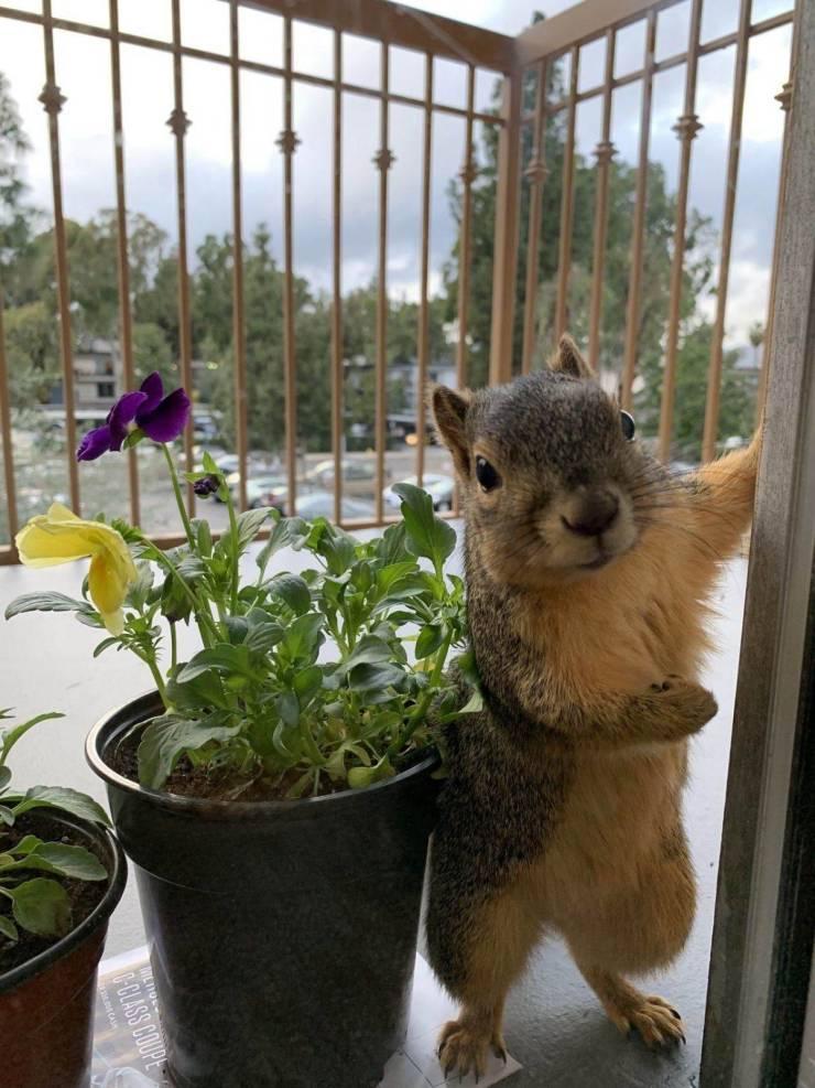 Белка заглядывает в окно