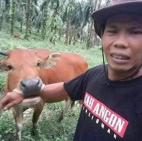 Корова укусила за руку