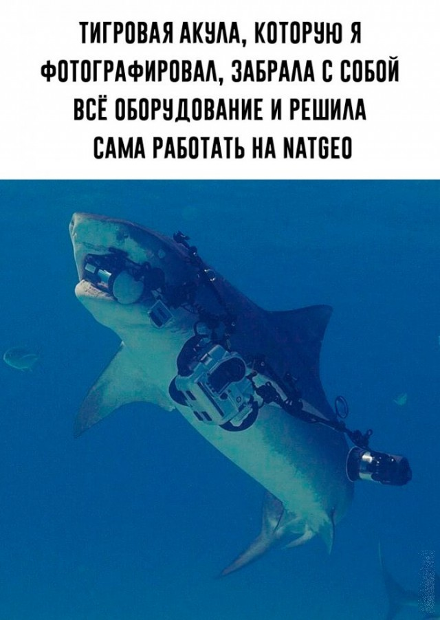 Акула украла камеру