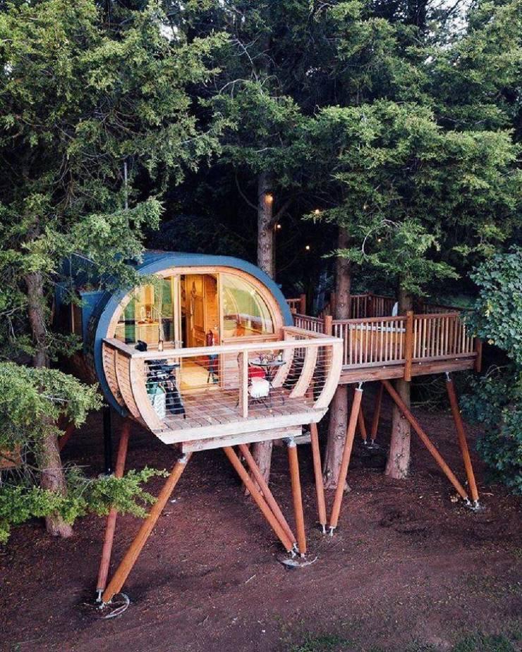 Домик на дереве в лесу