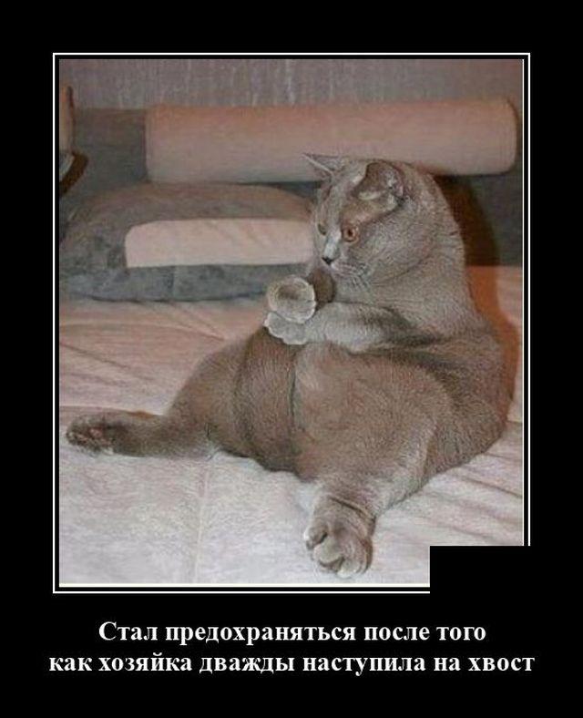 Демотиватор про хвост кота