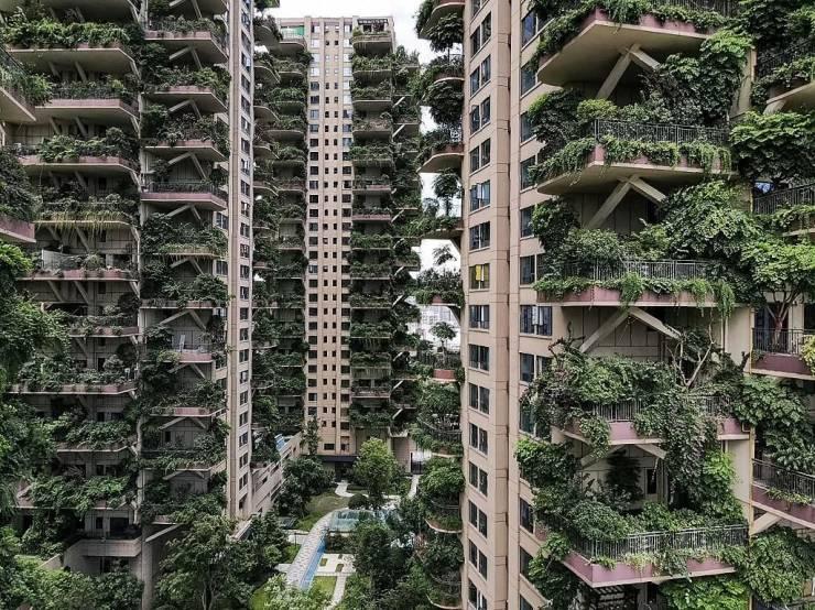 Зеленые небоскребы