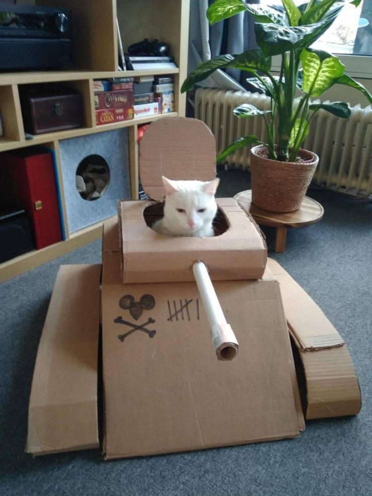 Кот сидит в коробке-танке