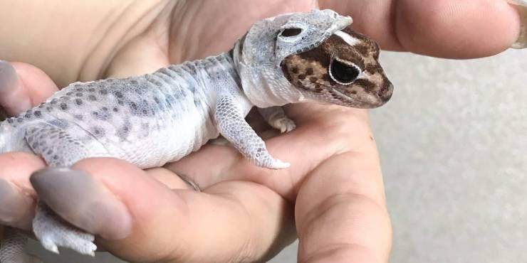 Ящерица меняет кожу