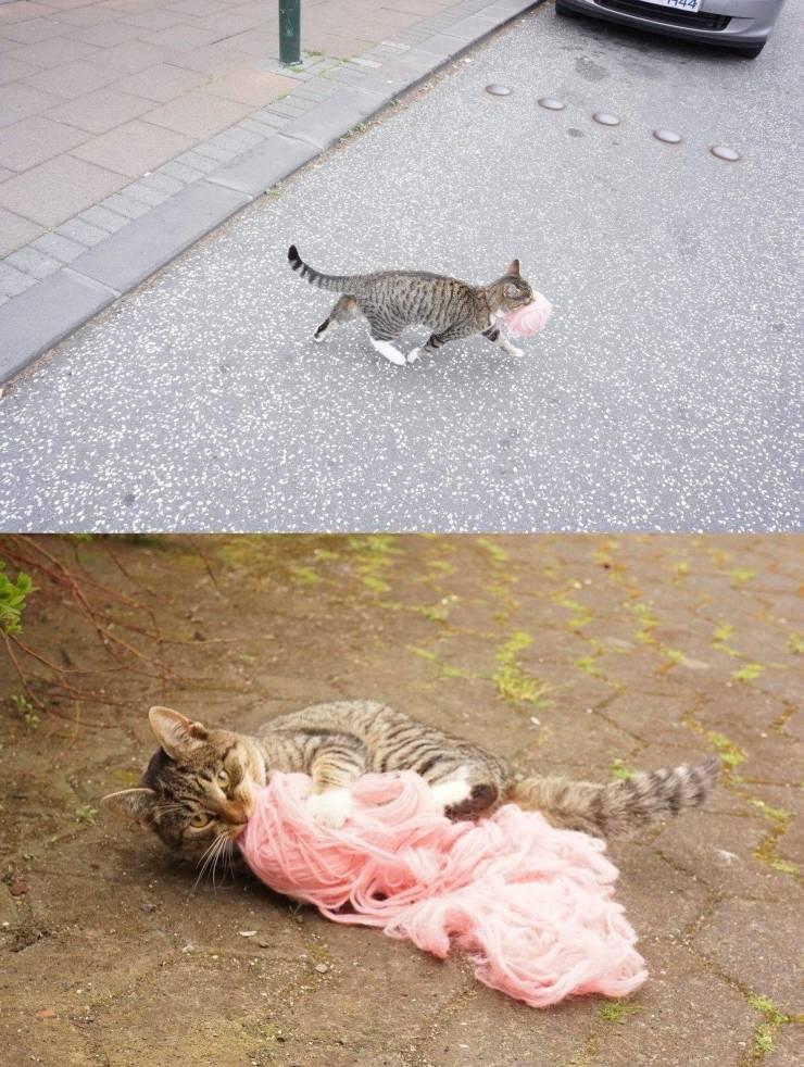 Кот и моток вязальных ниток