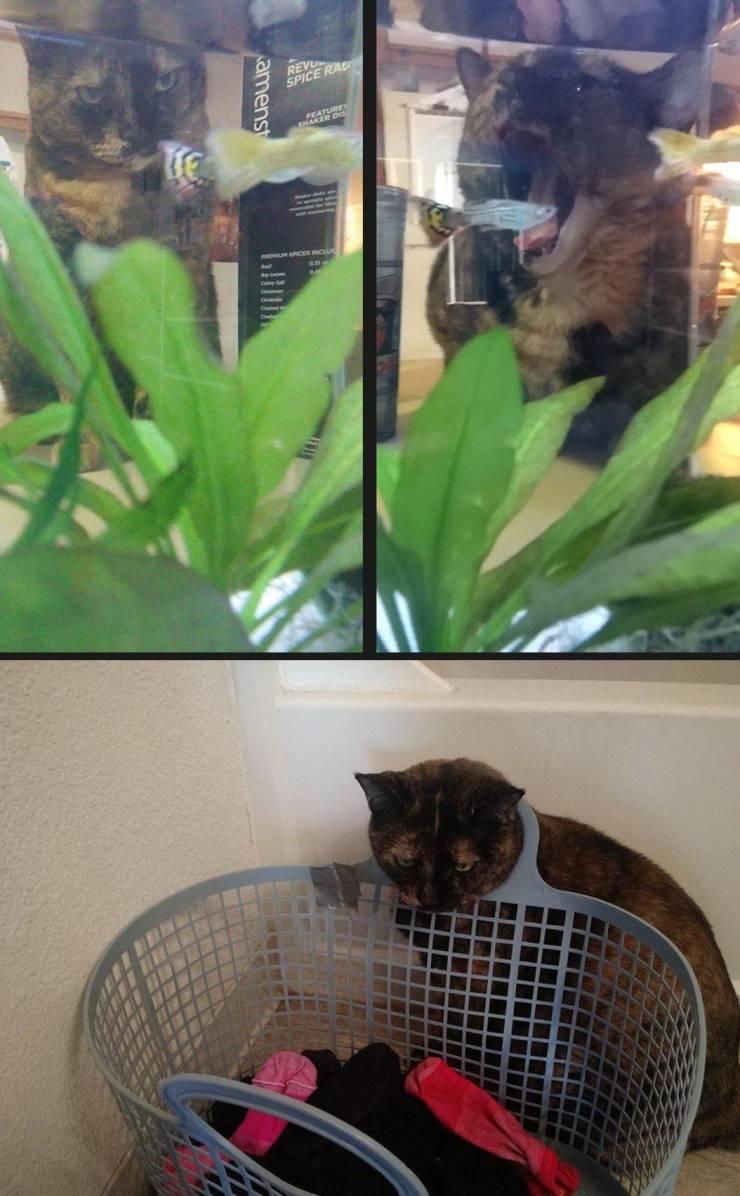 Кот охотится на рыбку в аквариуме