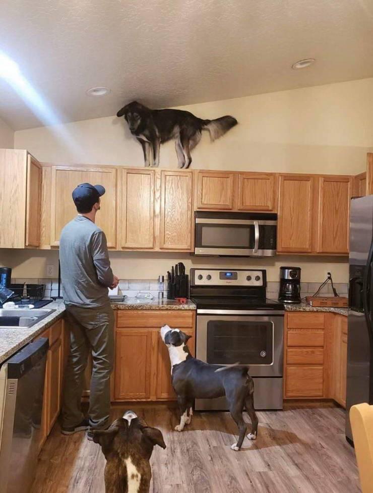 Собака на шкафчике под потолком