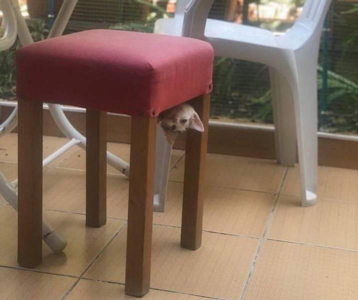 Котенок в стуле