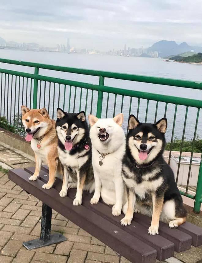 Собаки на лавочке