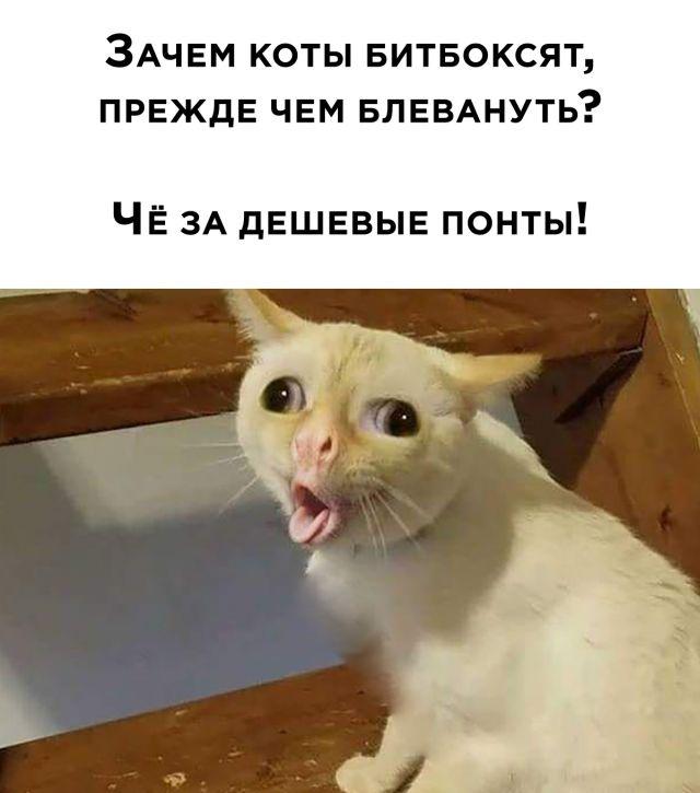 Коты и битбокс