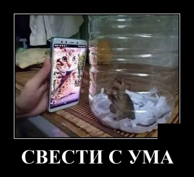 Демотиватор про кота и мышь