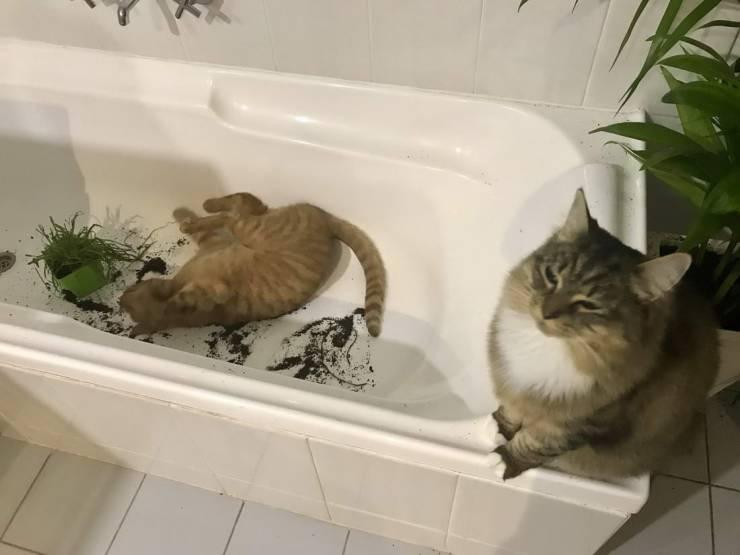 Кот и цветок в ванне