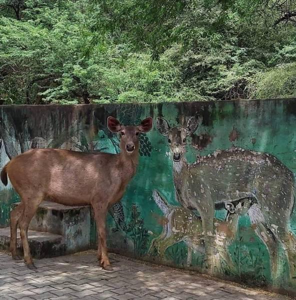 Олень и граффити