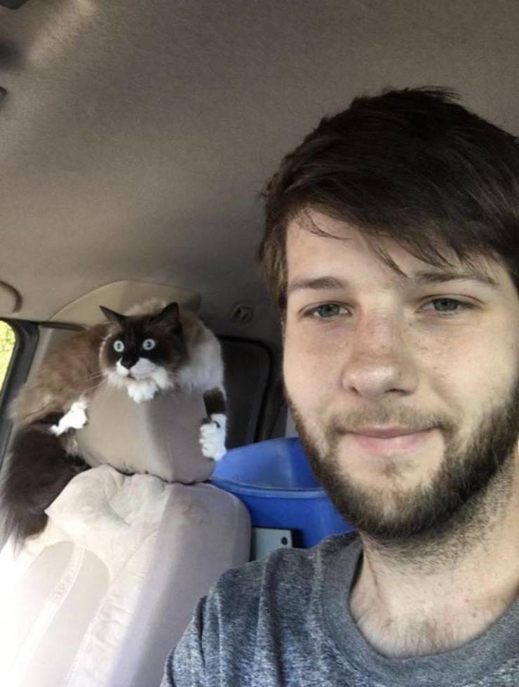 Испуганный кот в машине