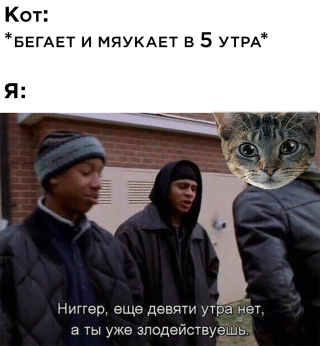 Кот мяукает в 5 утра
