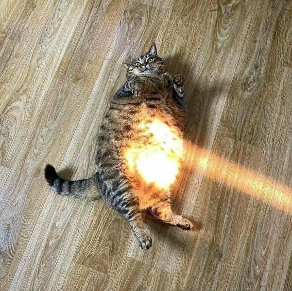Кот в лучах солнца
