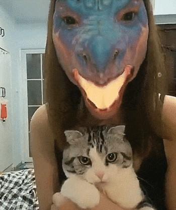 Маска дракона и кот