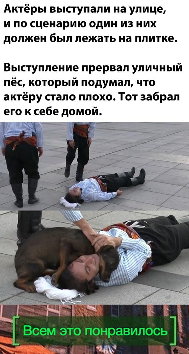 Бездомная собака нашла хозяина