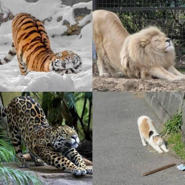 Коты большие и маленькие