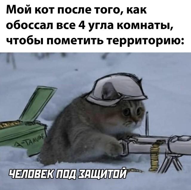 Кот защищает территорию
