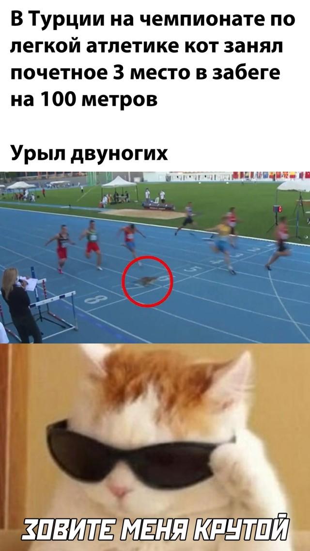 Кот на чемпионате по легкой атлетике