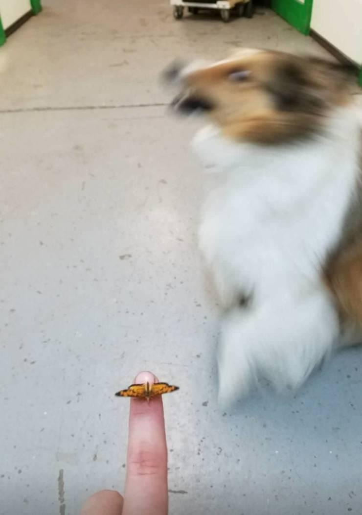 Собака боится бабочку