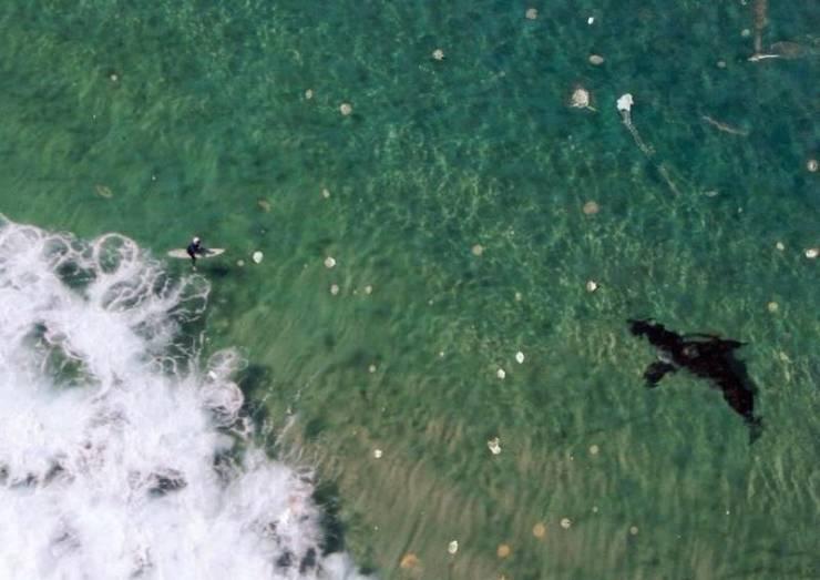 Серфинг и касатка