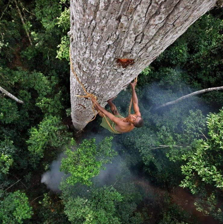 Карабкается на дерево на большой высоте