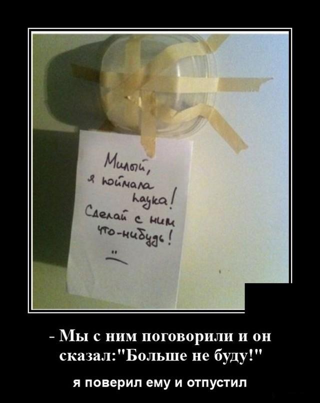 Демотиватор про паука