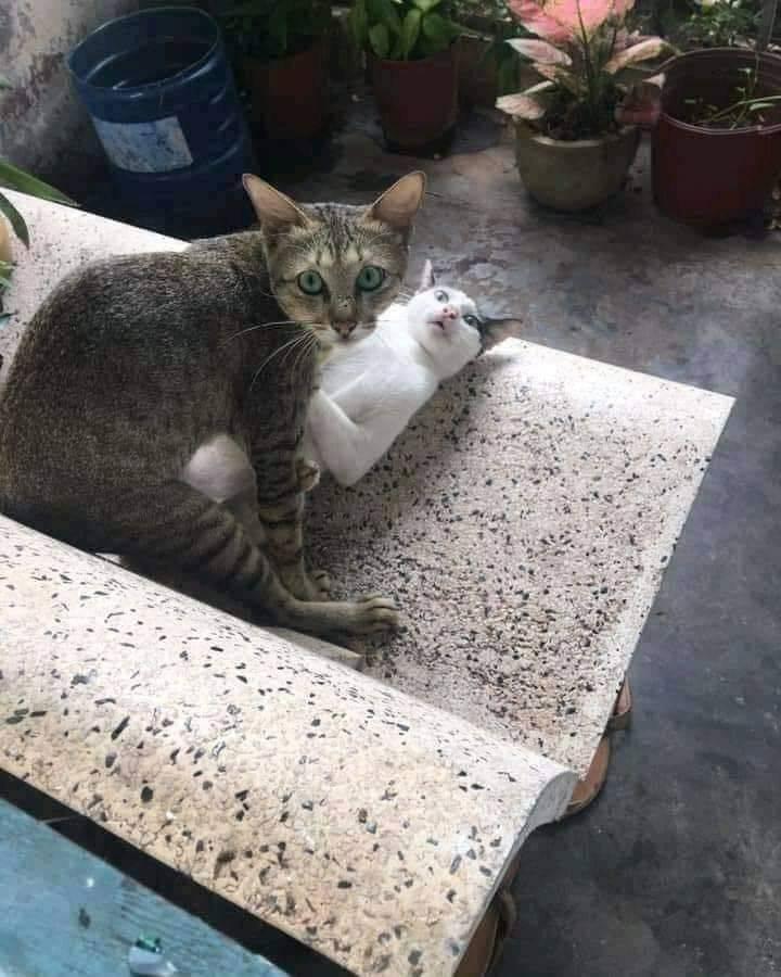 Застукал котов