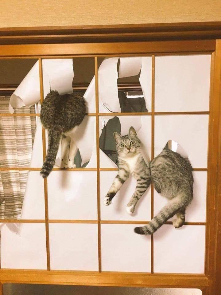 Коты застряли
