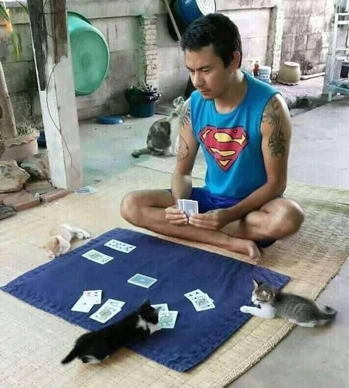 Игра в карты с котами