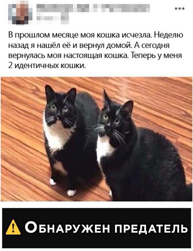Найденный на улице кот