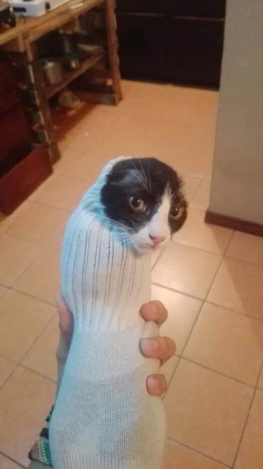 Кот в носке