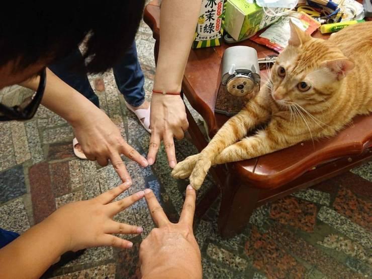 Кот и лбди