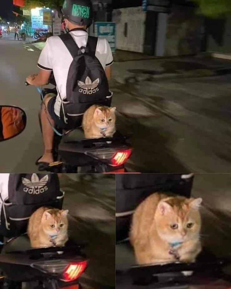 Кот на мотороллере