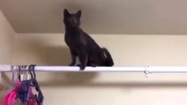 Кот на карнизе