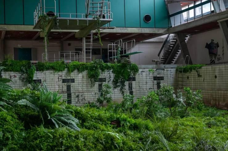 Бассейн с растениями